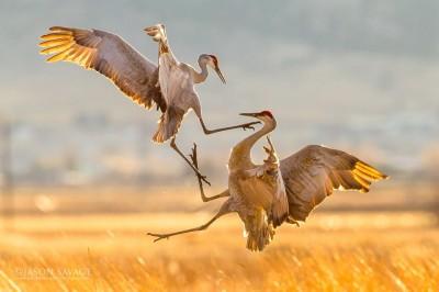 Jason-Savage-Photography-Montana-Crane