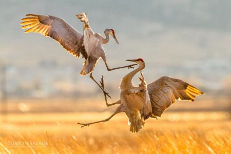 Jason-Savage-Photography-Montana-Crane