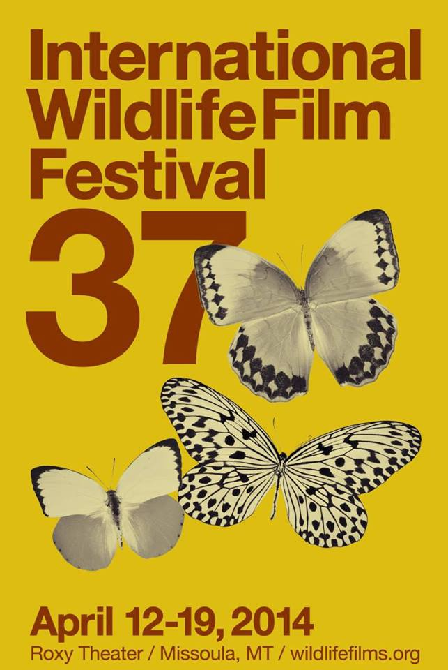 International wildlife film festival this week in missoula for International fly fishing film festival
