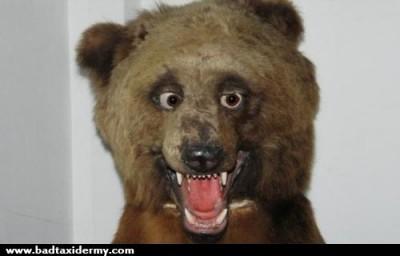 bad-taxidermy-bear