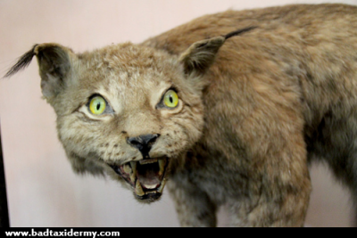 bad-taxidermy-bobcat