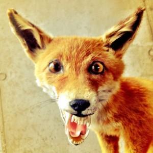 bad-taxidermy-fox