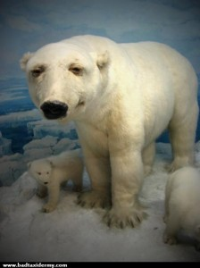 bad-taxidermy-polar-bear