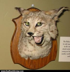 bad-taxidermy-sassy-bobcat