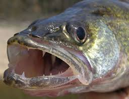 fastactionfishing