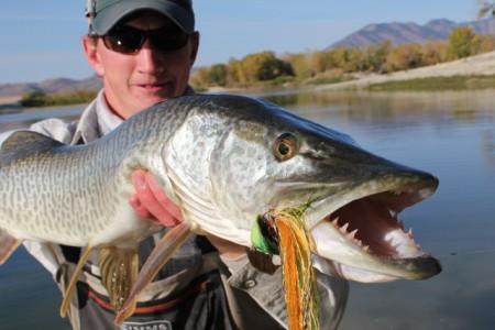 Tiger Muskie Montana Hunting And Fishing