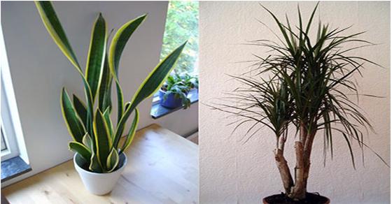 air-filtering-houseplants