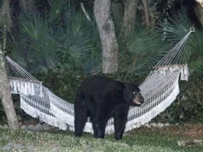bear_hammock_daytona_beach_rafael_torres_5_jt_140531_4x3_992