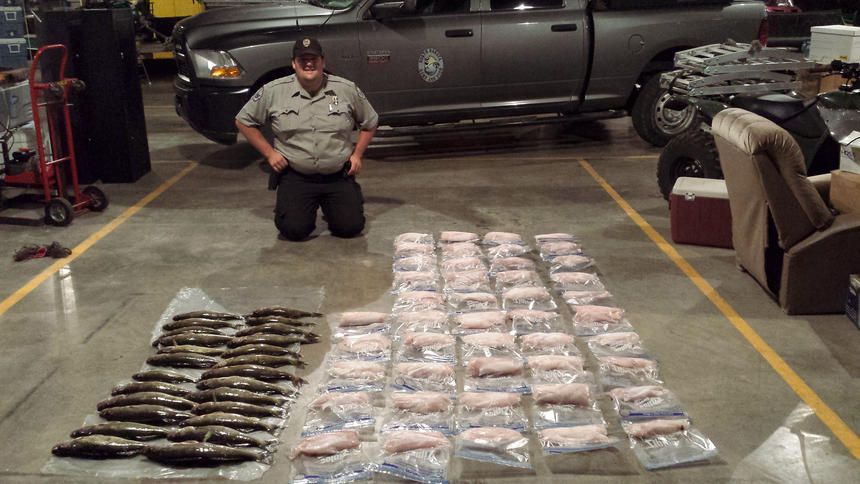 Anglers In North Dakota Found With 100 Walleye Over Limit