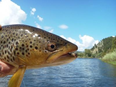 fishface3