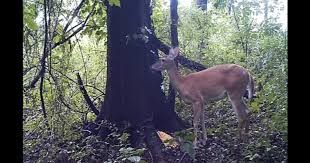 deerfart