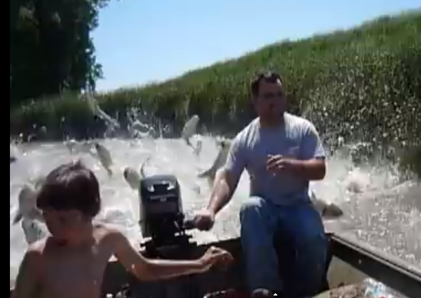 Crazy fish jumping outta water montana hunting and for Crazy fishing videos