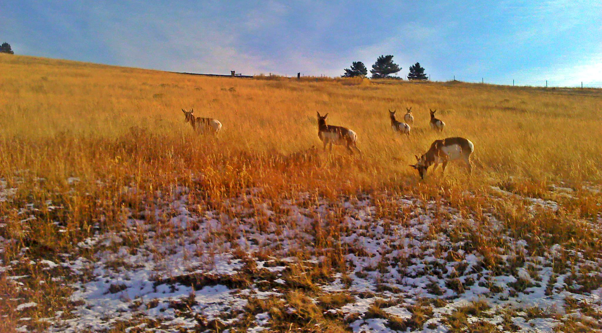 Image gallery montana antelope drawing results for Wyoming game and fish draw results