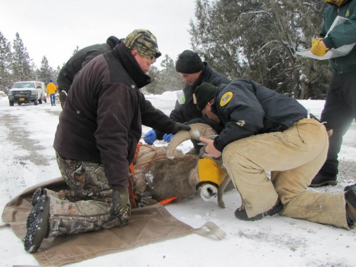 Photo of FWP Biologists in Region 1 : https://www.facebook.com/MontanaFWP.R1/photos/pb.