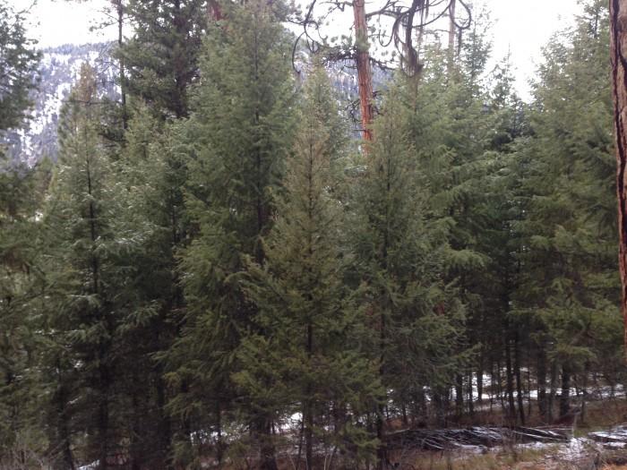 Trees dfoidfoisdjt