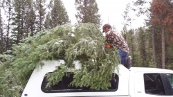 Trees on Top of Truck