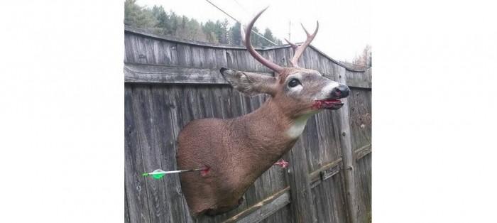 arrow-mount-1