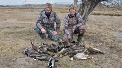 Duck photo 3