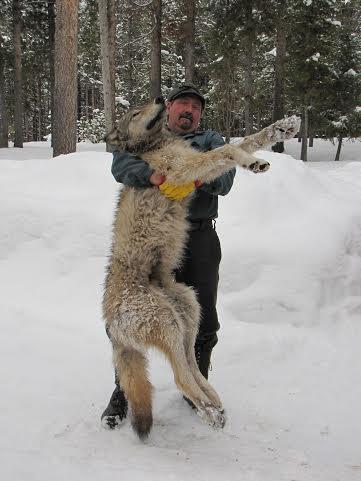 brianwolf3