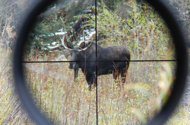 Montana ducks unlimited hosting moose license auction for Montana out of state fishing license