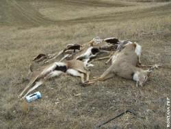 Gdive dumped deer1