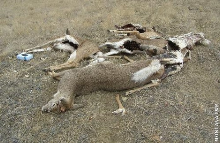 Wardens seek information on deer dumped in glendive for Montana game and fish