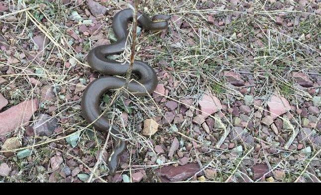 snakeit