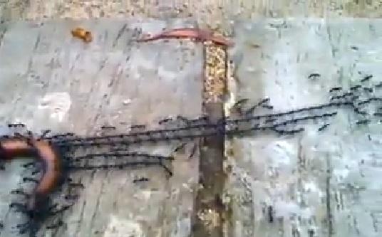 antswork