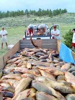 Cart full o' carp Photo Provided by Joelle Selk President   MBA