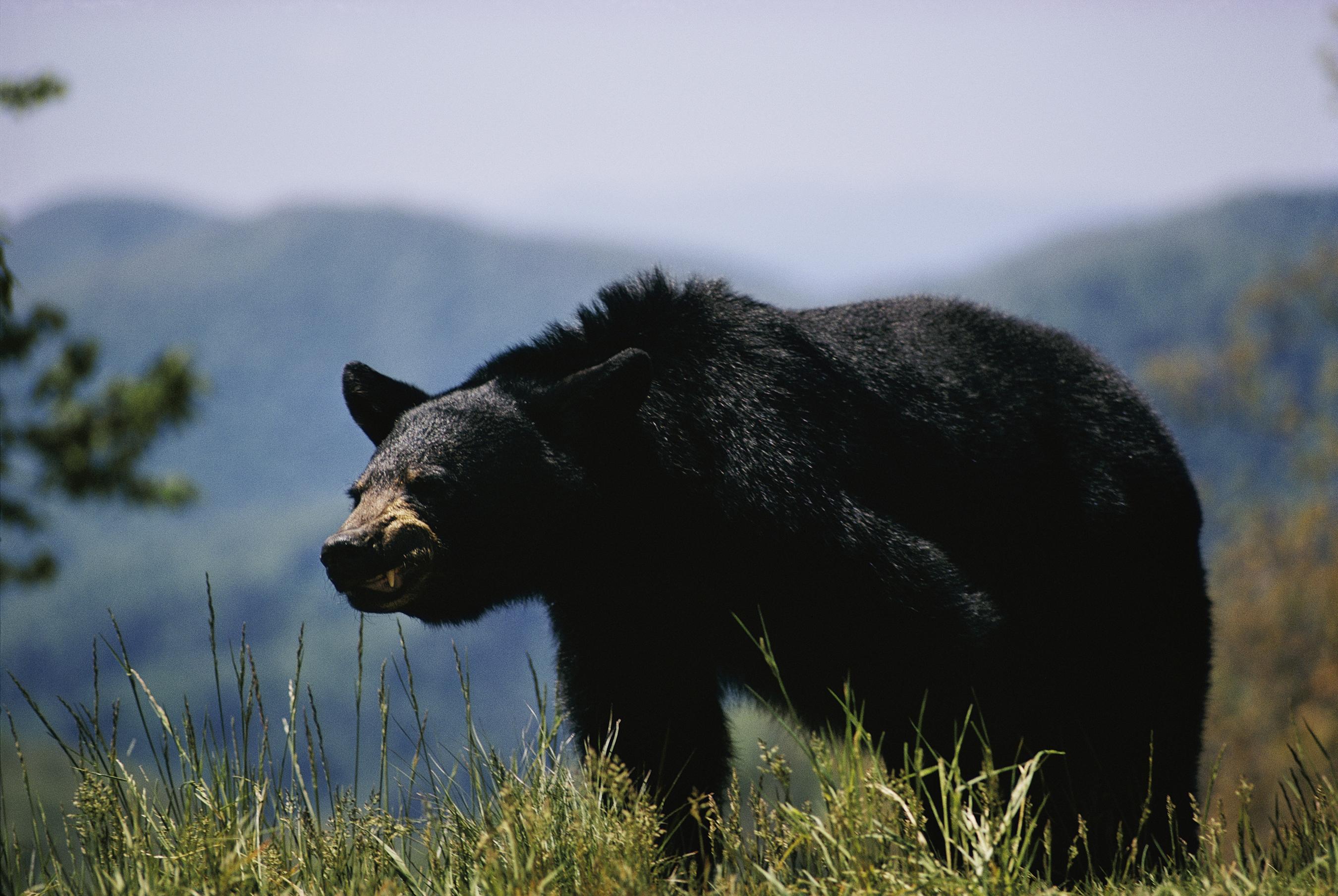 Black rhinos: Poaching of critically endangered species