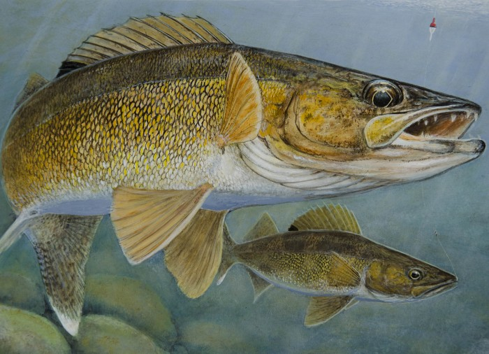 2015 Walleye Stamp competition First Place:  Stephen Hamrick