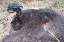 Spring hunting 2009 1290