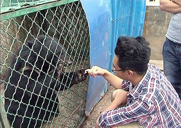 "Pic shows: A bear with an animal rescue centre staff member. A man has made headlines this week after a pair of 'puppies' he bought and raised for two years turned out to be black bears. Wang Kaiyu, the unwitting resident of Maguan County in south-west China's Yunnan Province discovered recently that instead of dogs, he had been raising two Asian black bears (Ursus thibetanus) which are classed as a protected species in China and require a permit to breed. Kaiyu said he was offered the two bears as puppies by a tradesman while travelling on China's southern border with Vietnam when he bought the two black and furry animals home in their cages. He realised over the years that while the animals grew larger and larger, so too did their appetites, even occasionally preying on the domestic fowl on his farmland. Kaiyu said he only realised however that his dogs were bears when he was sent a promotional notice sent out by the local wildlife and forestry authorities informing citizens about the different endangered animals that locals may or may not come across, and the laws governing their protection. It was then that Kaiyu realised that not only was he raising two Asian black bears, but also that the animals were also second class protected species. After much deliberation with his family, Kaiyu decided to telephone authorities and hand over the two bears, lest his good intentions for keeping the animals be misinterpreted as smuggling. Officials from the local Yunnan wild animal rescue centre immediately inspected the bears and found them to be a healthy female and a healthy male. The animals were brought back to the rescue centre for observation and breeding, with Kaiyu receiving plaudits for his honesty honesty. He was quoted afterwards saying: ""I am pleased, I thought I might end up in jail and was really worried after I called them."" (ends)"