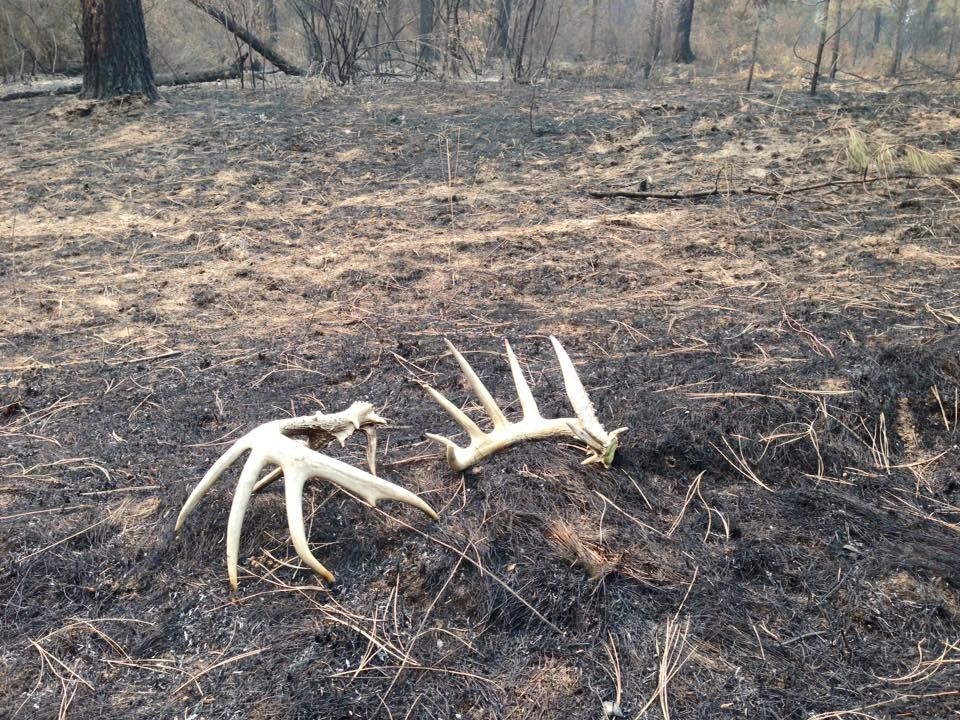 Monster Sheds Found By Idaho Firefighter Montana Hunting