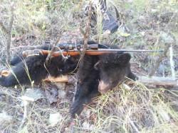jackie bear 2