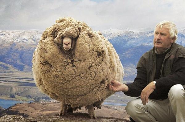 yk2sj-shrek-sheep (1)