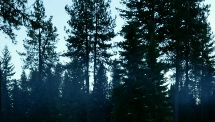 treethis