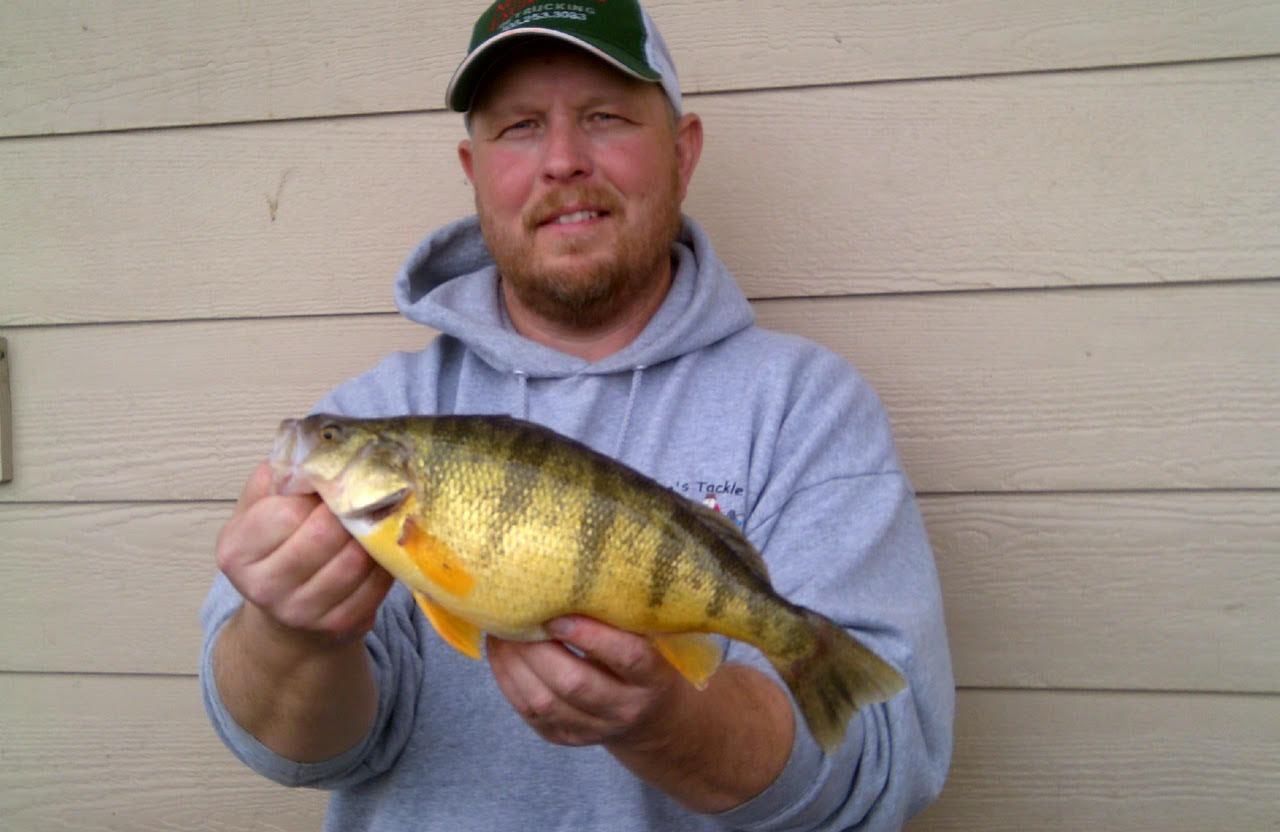 First week 2016 perch pounder ice fishing tourney results for Ice fishing perch