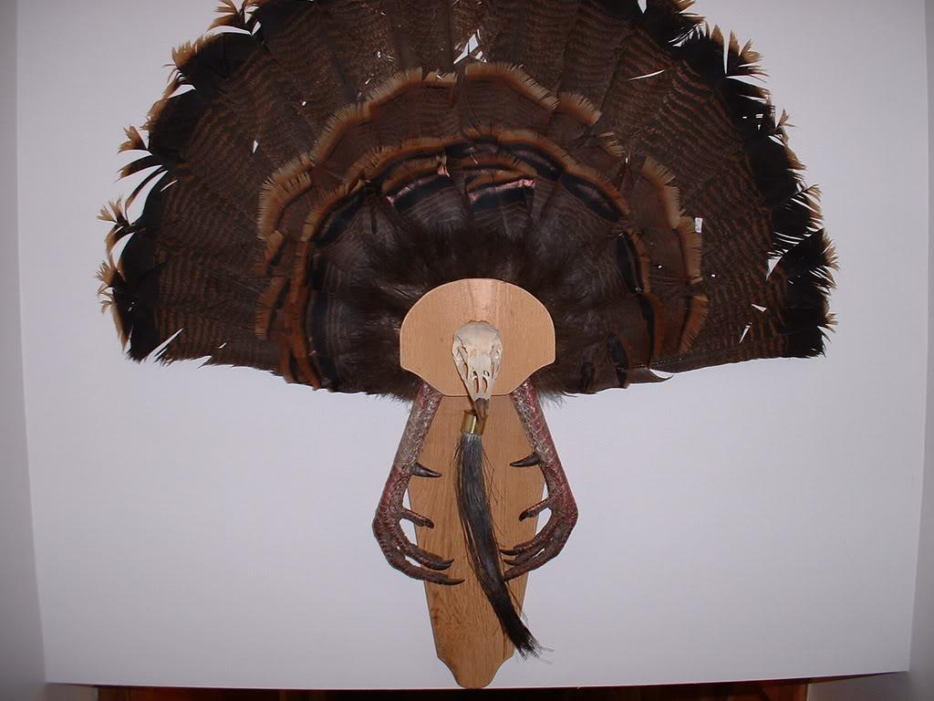 DIY Turkey Fan Mount | Montana Hunting and Fishing