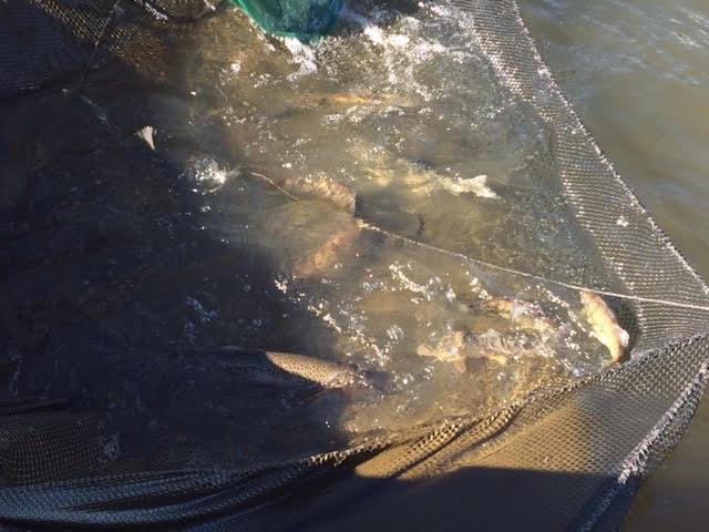 fishingnets4