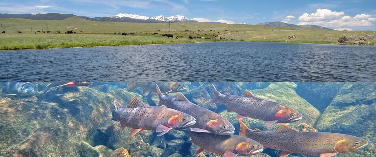 Southwest montana fishing report overview mid april 2016 for Deer creek reservoir fishing report