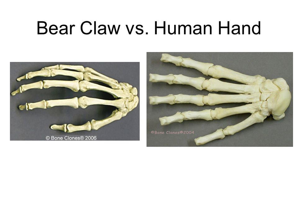 Humans with claws