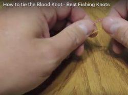 Capture blood knot video