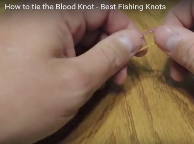 Capture blood knot video