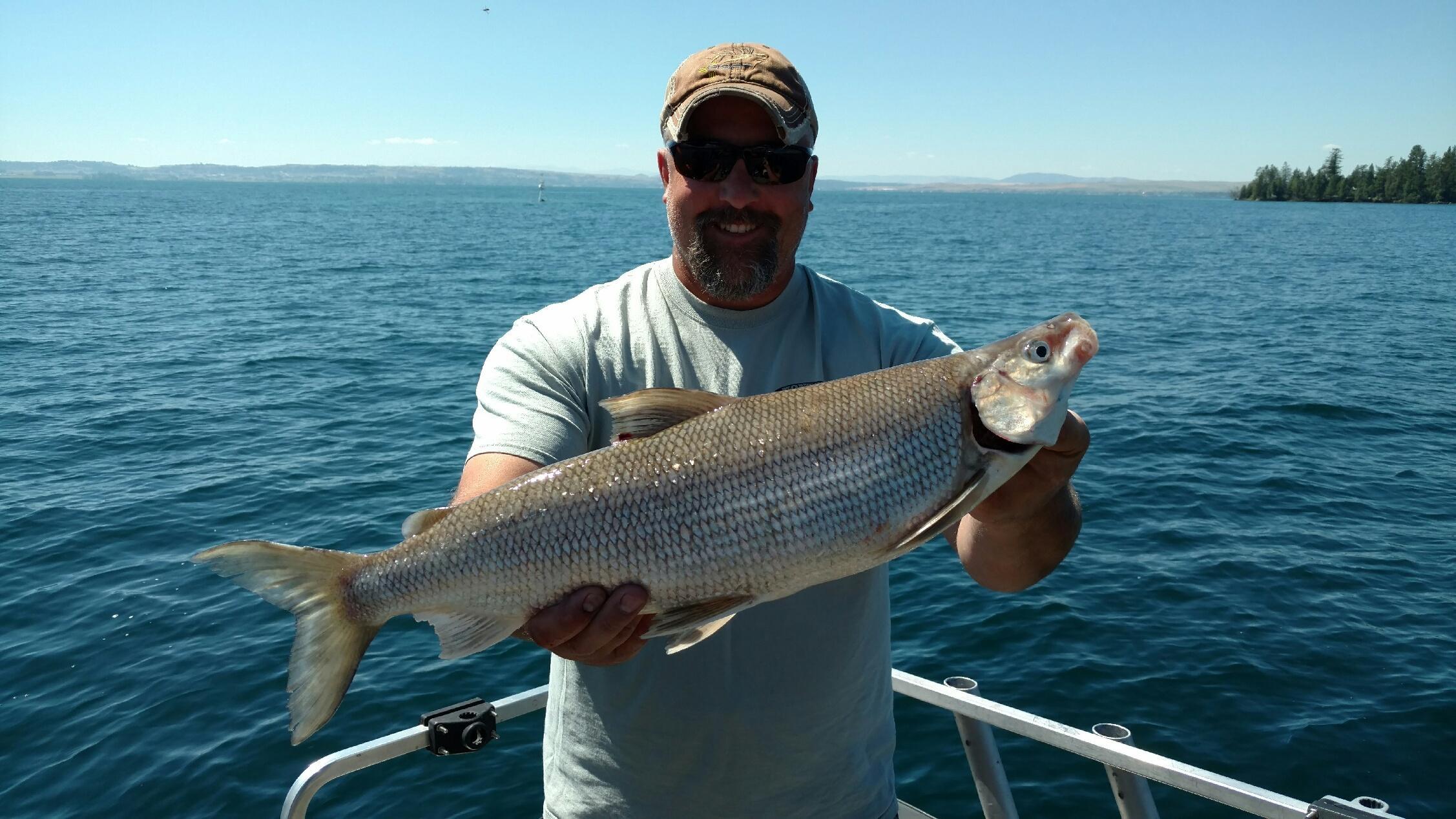 Whitefish fishing report at flathead lake for Whitefish montana fishing