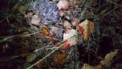 blood trail on leaves