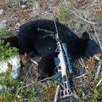 bearybear