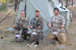 mule deer camp bucks