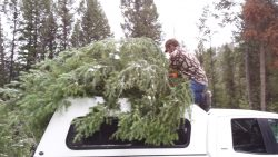 trees-on-top-of-truck
