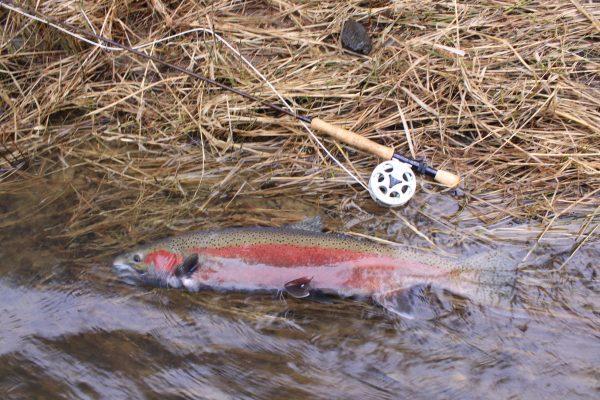 Bobber doggin rig for steelhead montana hunting and for Bobber fishing for steelhead